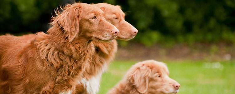 Tips for Dogs with Hip Dysplasia