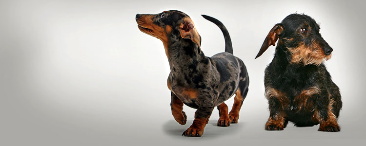 Preventing Pet Poisoning